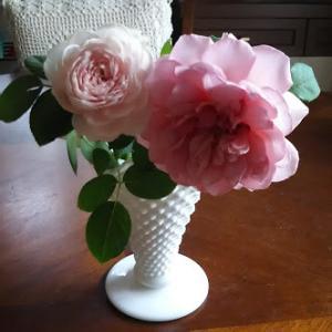 マルティナさんのKFS101/庭のバラ/カフェインフリーの生活