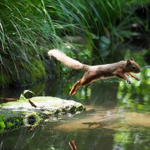 井の頭公園のリスの小径で二ホンリスに癒される!井の頭池ではカイツブリが子育て中