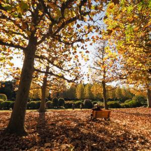 新宿御苑でプラタナス並木の秋の風景を楽しむ!バラも見ごろだった!