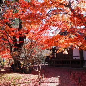 小諸城址・懐古園で紅葉を楽しむ!北陸新幹線で行く日帰りツアー