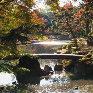 東京のおすすめ紅葉スポット六義園を散歩。日本庭園の風景が美しい!