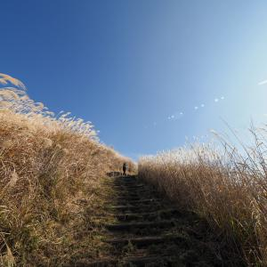 大野山で低登山!ゆるハイキングコースのつもりで行ったのだが。。。