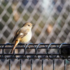 近場の公園で野鳥撮影!カメラや持っていると便利なものを紹介