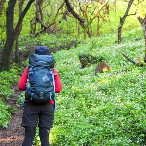 西山峠から高尾山の奥高尾縦走ハイキング!ニリンソウの群生が幻想的すぎる世界だった