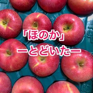 リンゴ届いた~!第一弾は「ほのか」