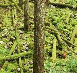 丹波山金山 不動滝遺跡 – 丹波山村 グリーンロード –