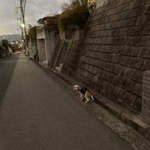 そんな11月9日の朝の散歩でした。