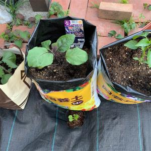 土の袋で野菜作り