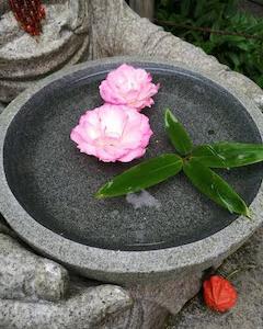 癒しの北鎌倉!子連れで行く穴場のおすすめ観光スポット