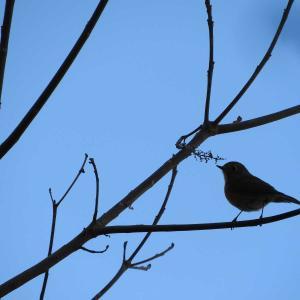 第47詩 小鳥