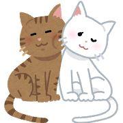 【猫様】秘かな楽しみ