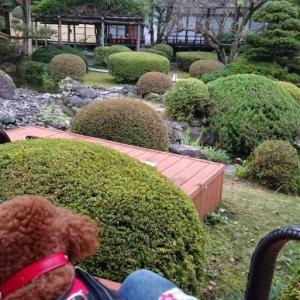 【トイプー】鬼怒川温泉旅行②鬼怒川絆【犬】