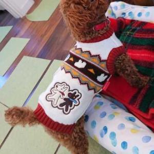 【トイプー】冬のお洋服を買いました【犬】