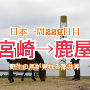 【229日目】人の手が加えられていない野生の馬が見れる都井岬!