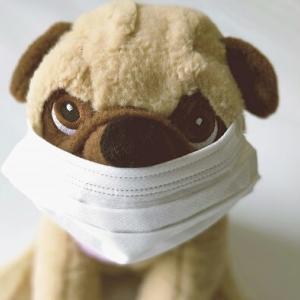 『犬用マスク』には危険がいっぱい!絶対におすすめしません!