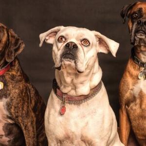 【犬の年齢早見表】小型犬・中型犬・大型犬