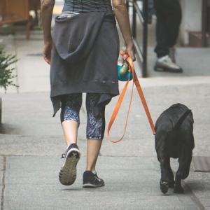 トリミング前の犬の散歩の注意点