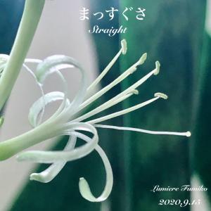 9/15心の羅針盤〜デイリーエナジーメッセージ