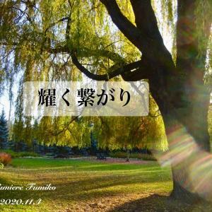 耀く繋がり~11/4心の羅針盤~デイリーエナジーメッセージ