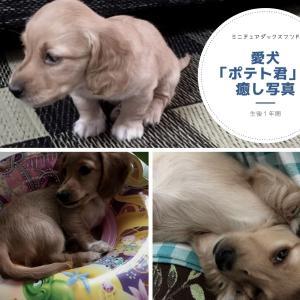 愛犬「ポテト君」の癒し写真♡