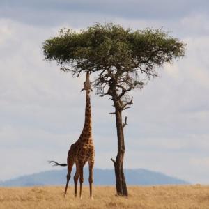 儲かるラストチャンスはアフリカ株!? 注目のETF4選