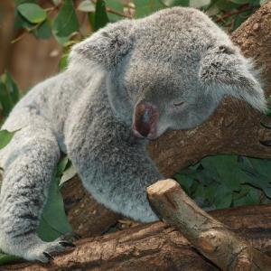 眠剤を飲んだら、子供みたいにぐっすり寝た!