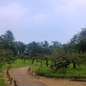 【自転車④】大倉山周辺ポタ