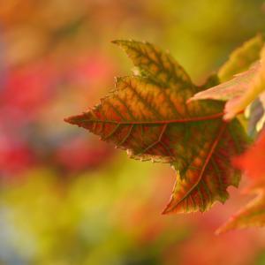 季節の変わり目に気を付けること
