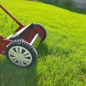 おっさんは庭へ芝刈りに。あられちゃん専用ドッグランの整備開始。