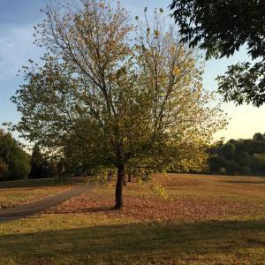 落ち葉の季節...