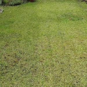 芝生の管理。一般人はこのくらいで丁度いい。完璧を求め過ぎてはいけない。
