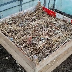【多肉】本格的農業用の荒れたビニールハウスを蘇らせる ~その4【ハウス内雑草の堆肥化編】~