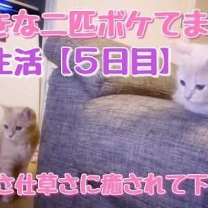 共同生活【5日目】寝ぼけて思考停止する姉妹が可愛い!まったり見てください!