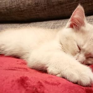 遊び過ぎて寝たらまったく起きないポテ子爆睡モード!