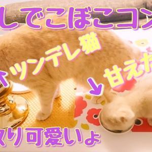 仲良し凸凹コンビ!ツンデレラテ子と甘えたいポテ子!【マンチカン】【猫動画】