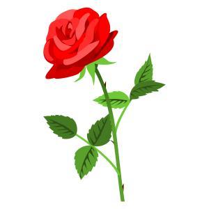 """""""片付け""""は美しいバラを咲かせるイメージで!【自己啓発】"""
