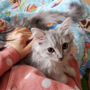 猫ちゃんを飼い始めたら?