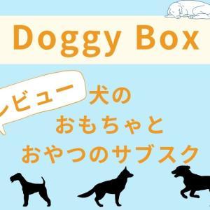 【Doggy Box】犬のおもちゃとおかしのサブスクを実際に使った感想を正直にレビュー【特典あり】