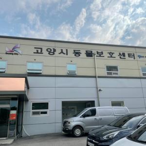 韓国の動物保護センターに行ってきた