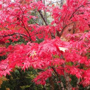 茨城の紅葉めぐり 袋田の滝・花貫渓谷・竜神大吊橋