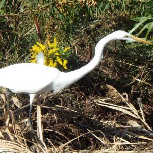 川辺にいる野鳥はどんな鳥 いつもの水鳥とひと休みの渡り鳥