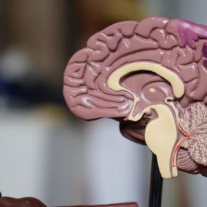 「脳の可塑性」を最大限に活用して限界を超える療育の原理原則  9つの大事なこと