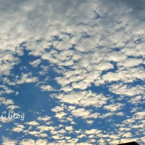 夕方散歩(ワンコに似た雲)