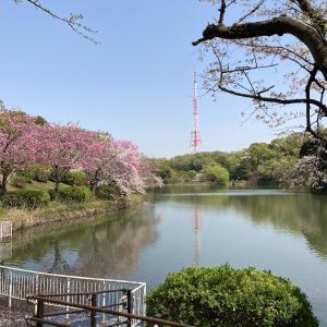 県立三ツ池公園 花見昼ポタ