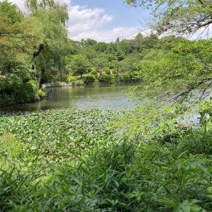 三ツ池公園と鶴見の起伏