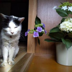 愛すべきトライドケアマネジメントのマスコット猫、コロちゃんが逝去