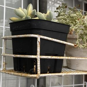 【100均】植物を置いているワイヤーかごが傷んできたので!