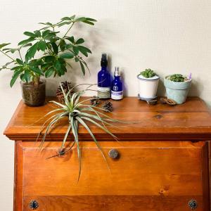 室内で育てやすい植物・決定版!観葉植物・多肉植物【くまパン園芸】