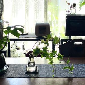 朝、起きてはじめに・・・水耕栽培の水かえ【観葉植物】