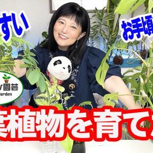 育てやすい&お値段お手頃の観葉植物のある暮らし【くまパン園芸】